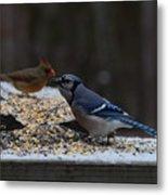 Natures Birds 51 Metal Print