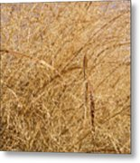 Natural Abstracts - Elaborate Shapes And Patterns In The Golden Grass Metal Print