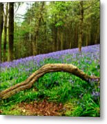 Natural Arch And Bluebells Metal Print