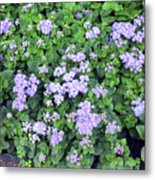 Natural Bush With Purple Small Flowers. Metal Print