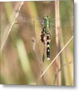Natural Canvas With Dragonfly Metal Print