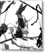 Natural Composition II Metal Print