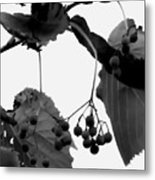 Natural Composition Metal Print
