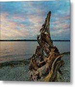 Natural Driftwood At Birch Bay State Park Metal Print