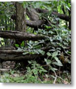 Natural Wood Fence Metal Print