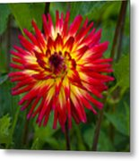 Natural Fireworks Metal Print