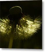 Natural Gold Metal Print
