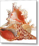 Natural Shell Collection On White Metal Print