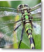 Natural Stained Glass Metal Print