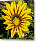 Natural Sun Shine Metal Print