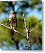 Naturally Blown Dried Feathers Metal Print