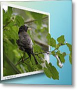 Nature Bird Metal Print