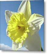 Nature Daffodil Flowers Art Prints Spring Nature Art Metal Print