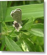 Nature In The Wild - A Floral Perch Metal Print