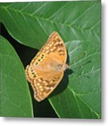 Nature In The Wild - A Green Haven Metal Print