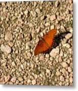 Nature In The Wild - A Splash Of Color On The Rocks Metal Print