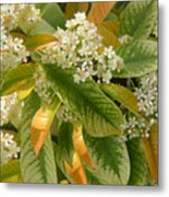 Nature In The Wild - A Summer's Day Metal Print