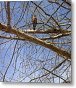 Nature In The Wild - Annoucing Spring Metal Print