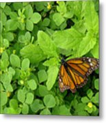 Nature In The Wild - Beautiful Solitude Metal Print