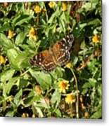 Nature In The Wild - Colors Of Autumn Metal Print