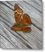 Nature In The Wild - Fall Colors Metal Print