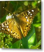 Nature In The Wild - Kaleidoscope Of Color Metal Print
