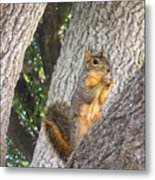 Nature In The Wild - Keeping Watch Metal Print