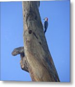 Nature In The Wild - Knocking On Wood Metal Print
