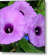 Nature In The Wild - Morning Bells Metal Print