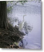 Nature In The Wild - Musings By A Lake Metal Print