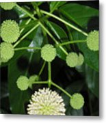 Nature In The Wild - Natural Pom Poms Metal Print