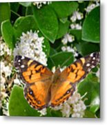 Nature In The Wild - On Golden Wings Metal Print