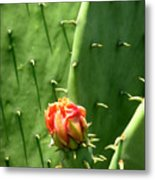 Nature In The Wild - Red Against Green Metal Print
