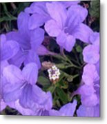 Nature In The Wild - Ring Around The Posy Metal Print