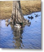 Nature In The Wild - Soaking Up The Sun Metal Print