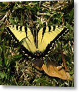 Nature In The Wild - Splendor In The Grass Metal Print
