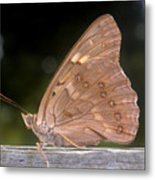 Nature In The Wild - The Autumn Migrant Metal Print