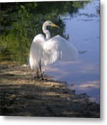 Nature In The Wild - The Wing Of A Snowy White Metal Print