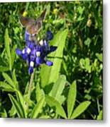 Nature In The Wild - Those Sweet Blues Metal Print