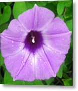 Nature In The Wild - Glory In Purple Metal Print