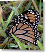 Nature In The Wild - Traveling Light Metal Print