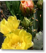 Nature In The Wild - Two Blooms And Counting Metal Print