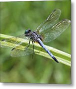 Nature Macro - Blue Dragonfly Metal Print