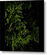 Nature Plants Metal Print