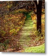 Nature Trail Metal Print