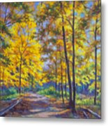 Nature Trail Turn Of Autumn Metal Print by Fiona Craig