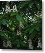 nature Ukraine blooming chestnuts Metal Print