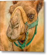 Nature Wear Camel Metal Print