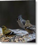 Natures Birds 59 Metal Print