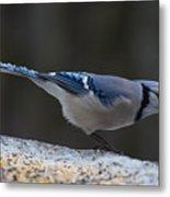 Natures Birds 65 Metal Print